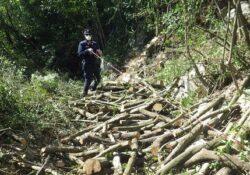 PIETRAMELARA / ROCCAROMANA. Furto legna da ardere, Carabinieri Forestali beccano albanese 31enne in un bosco demaniale appartenente al Comune.