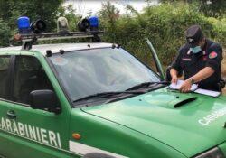 Caserta / Provincia. Carabinieri Forestale sanzionano una persona sorpresa a smaltire illegalmente rifiuti.